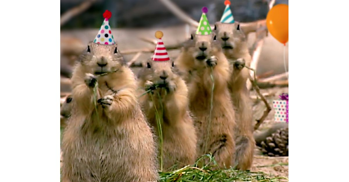 Prairie Dog Birthday Song Video Ecard Personalize Lyrics