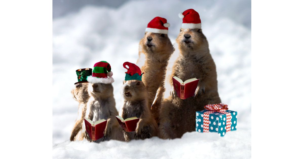 Prairie Dog Christmas Singing Video