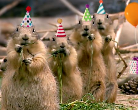 Prairie Dog Birthday Song Video Ecard (Personalized Lyrics)