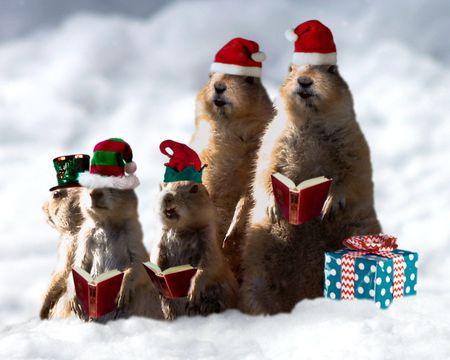 Prairie Dog Christmas Singing Video Ecard (Personalize Lyrics)