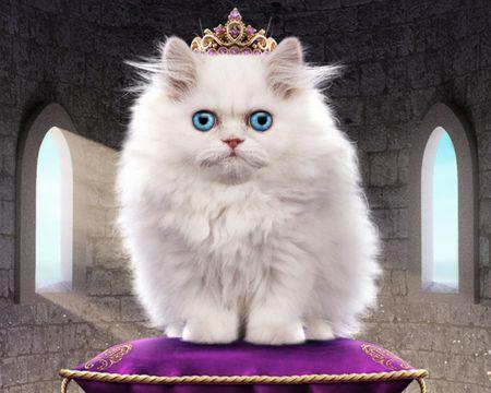 Talking Cat Queen (Personalize)