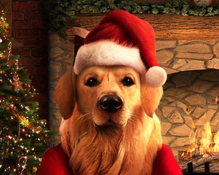 Talking Santa Dog Ecard (Personalize)