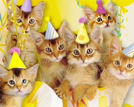Singing Birthday Cats Ecard