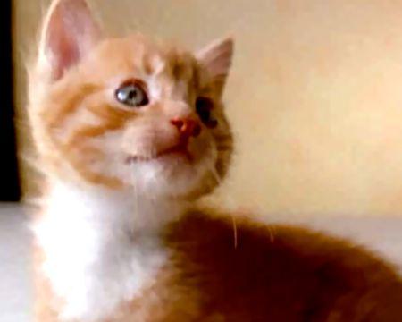 Video: Warm & Fuzzy Kitten