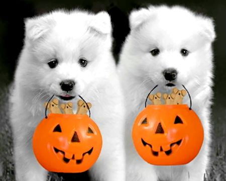 Have a Yappy Halloween
