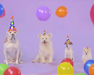 Funny Birthday Pets Ecards