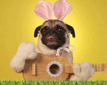 Easter Pooch Concert (Famous Tune)