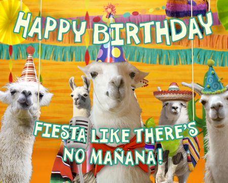 Llama 'La Bamba' Birthday (Famous Song)