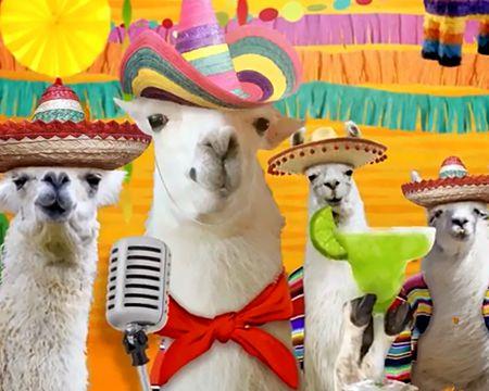 Llama 'La Bamba' Cinco De Mayo (Famous Song)