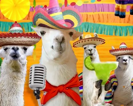 Llama La Bamba Ecard Famous Song