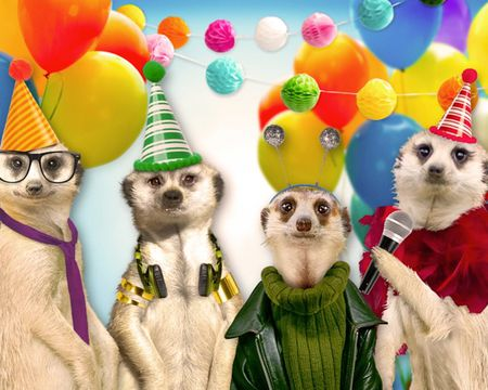 Meerkat Birthday (Fun Song)