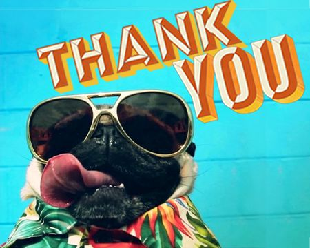 Gratitude Attitude - Doug The Pug