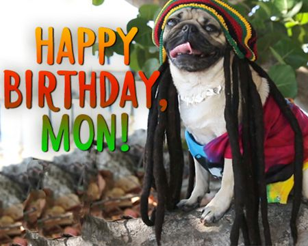 Reggae Birthday - Doug The Pug