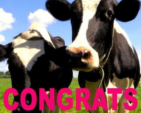 Herd You Did it - Congrats Ecard (Famous Song)