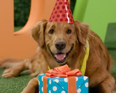 Tail-Waggin' Birthday Ecard