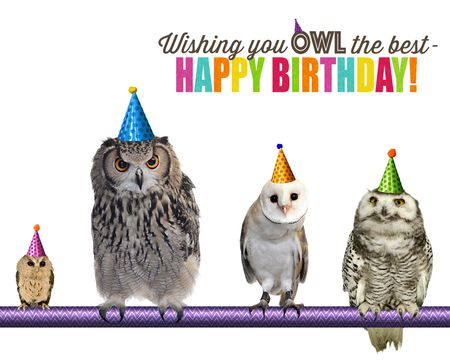 View Funny Birthday Owl The Best Ecard