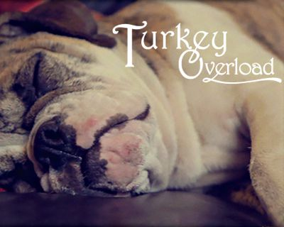 Turkey Overload (Postcard)