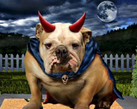 Halloween Bulldog (Talking Card)