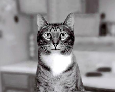 Cat Talk (Talking Card)