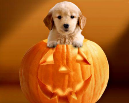 Halloween Pupkin (Talking Card)