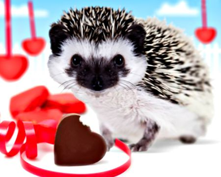 Hedgehugs and Kisses (Talking Card)