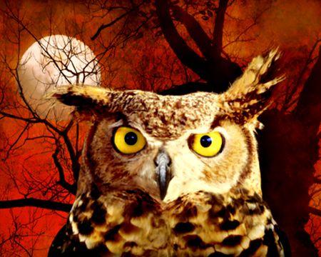Happy Owloween! (Talking Card)