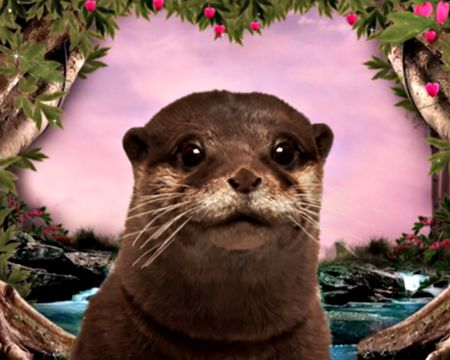 Otterly in Love (Talking Card)