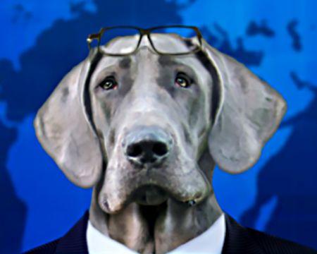 Dog-Gone Fake News (Talking Card)