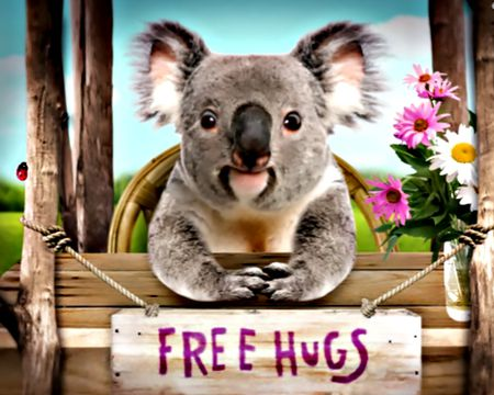 Koalafied Hugger (Talking Card)
