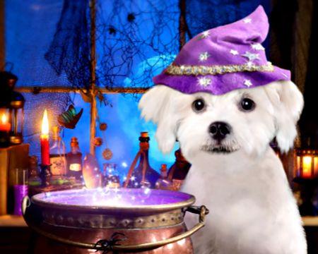 Sheer Terrier (Talking Card)