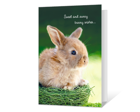 Printable easter cards for kids american greetings sunny bunny wishes printable purrfect easter printable m4hsunfo Image collections