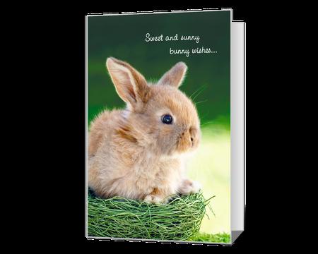 Sunny Bunny Wishes
