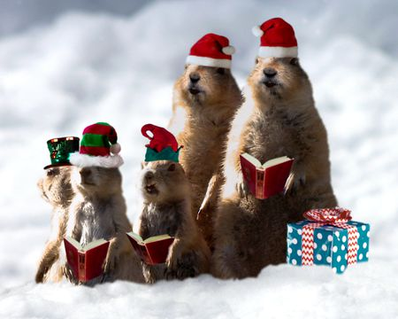 Prairie Dog Christmas Singing Video Ecard (Personalize Lyrics)