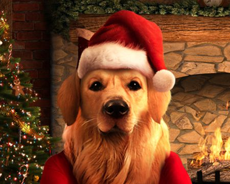 Talking Santa Dog Ecard (Personalize)