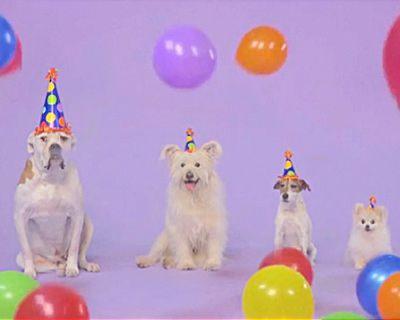 Woofy Birthday