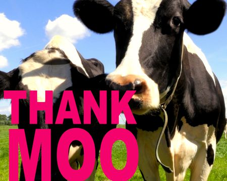 Thank MOO Very Much (Famous Song)