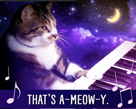 That's A-meow-y Ecard (Fun Song)