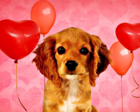 Puppy Love (Talking Card)