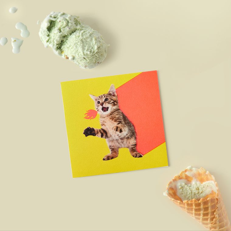 Kitten Blank Card - Birthday, Friendship, Thinking of You