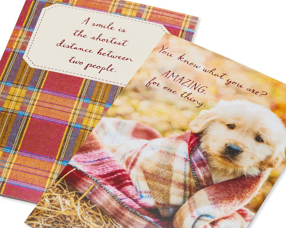 Puppy and Plaid Thanksgiving Cards, 6-Count
