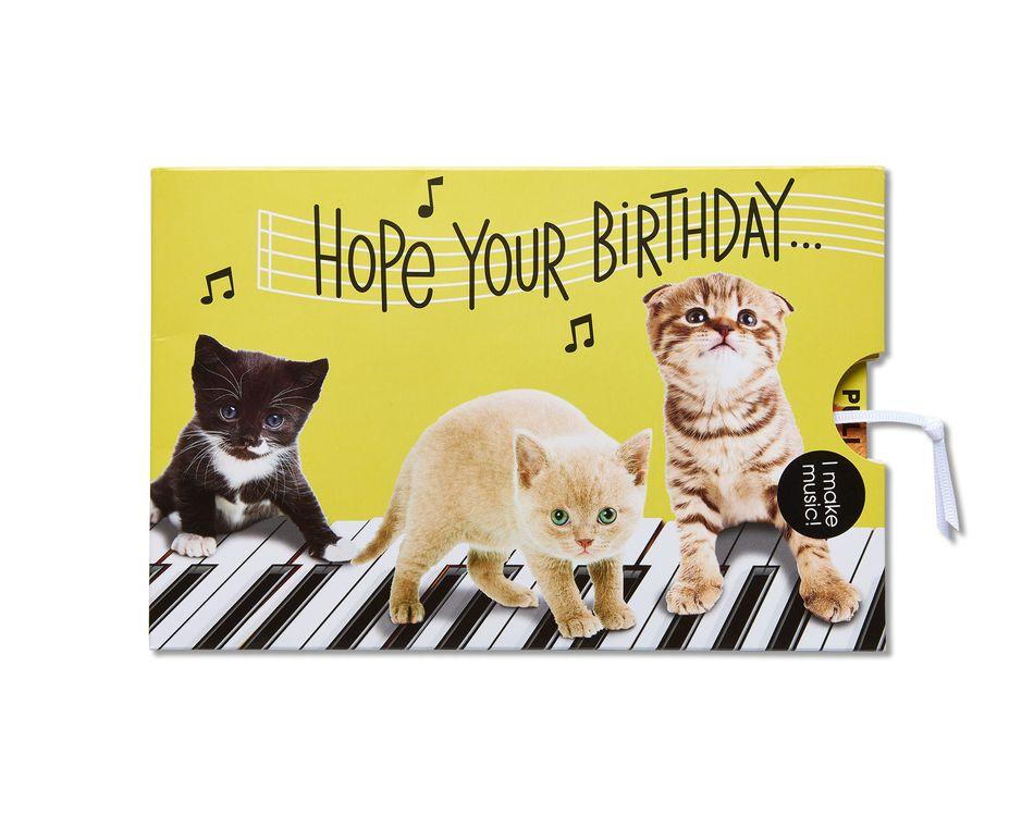 Kitten Birthday Card American Greetings